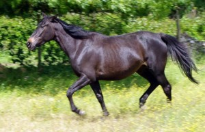 egua-620x400