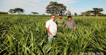 Secretário de Agricultura e Pecuária Ivanir, responsável Luiz Félix e Wesley Fávaro, entusiasmados com o banco de mudas do capim Kurumi cultivado em assentamento de Itaquirai