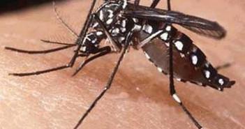 dengue-770x410