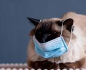 Gatos contraem e transmitem Covid-19 sugere estudo